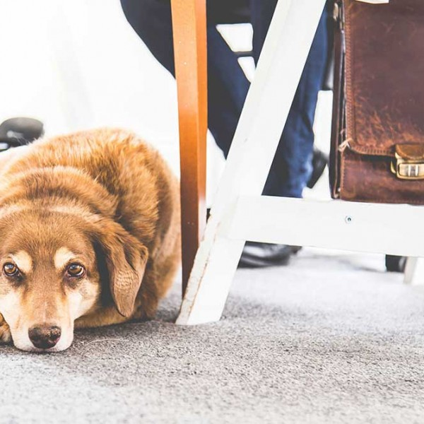Zahra Media Group's office dog Penny sitting under a desk in the office