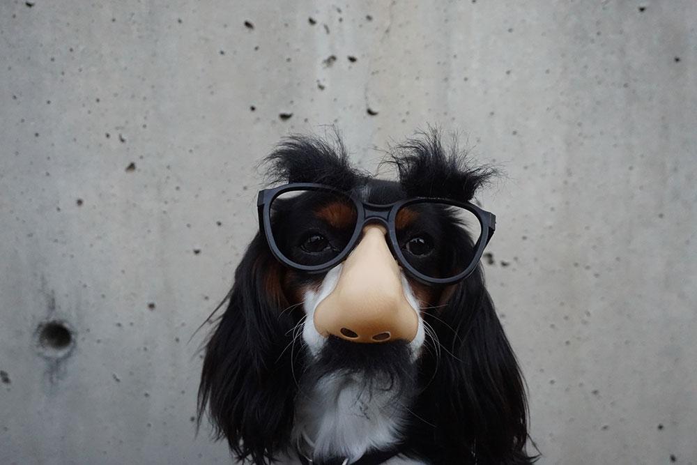 Dog wearing funny glasses
